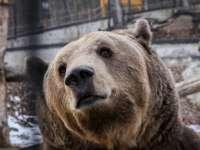 Lássuk a medvét! Medvenapok az országban 2020